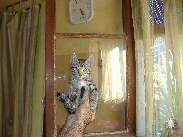 chaton adopté aout 08